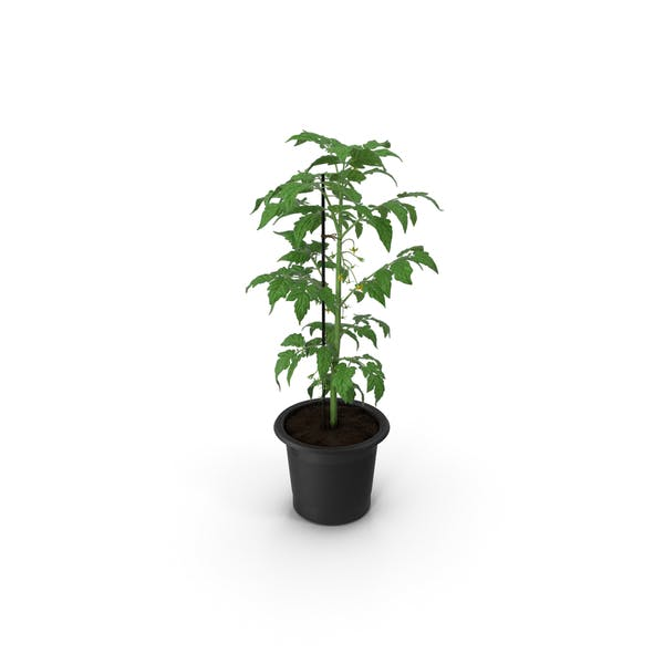 Tomato Plant Pot with Flowers Fur