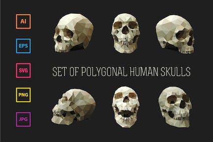 Satz polygonaler menschlicher Schädel