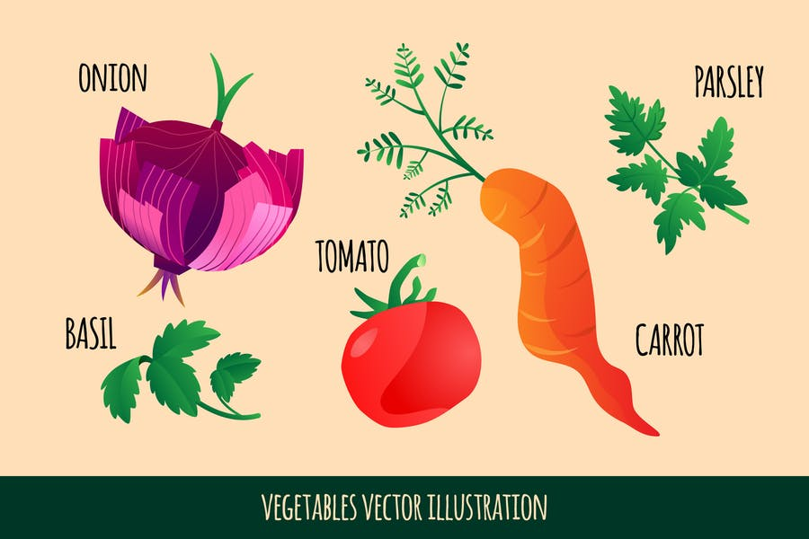Vector Vegetable Illustration - Onion and Carrot