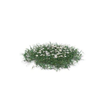Einfaches Gras, groß