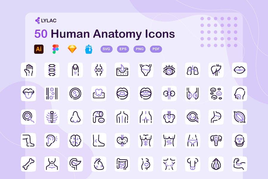 Lylac - Human Anatomy Icons