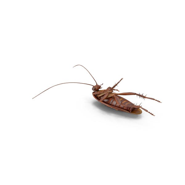 Cover Image for Dead Cockroach