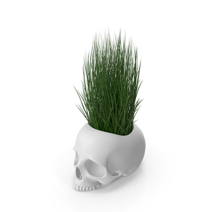 Skull Head Flower Pot with Grass