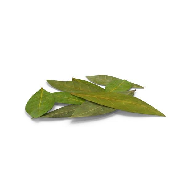 Thumbnail for Bay Leaves
