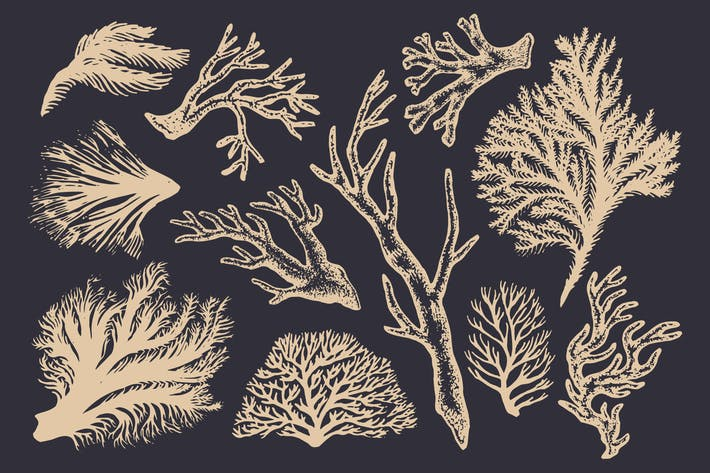 Thumbnail for Coral Illustrations & Templates