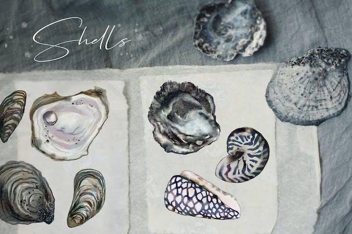 Thumbnail for Aquarell Ozean Muscheln Illustrationen Set