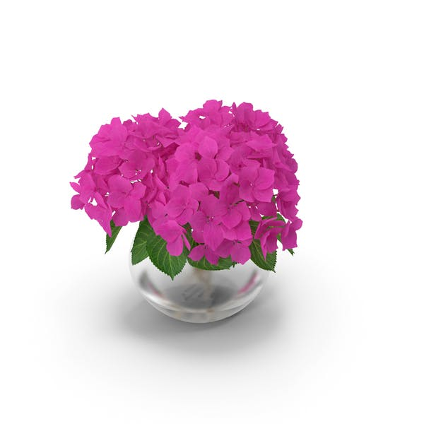 Thumbnail for Hydrangea Macrophylla Pink Annabelle in Glass Vase