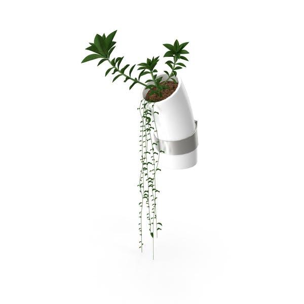 Wand-Blume