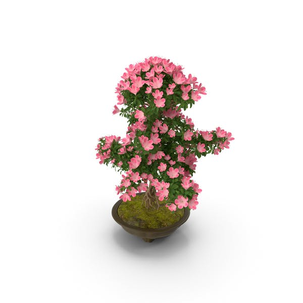 Thumbnail for Small Bonsai Tree with Flowers in Pot