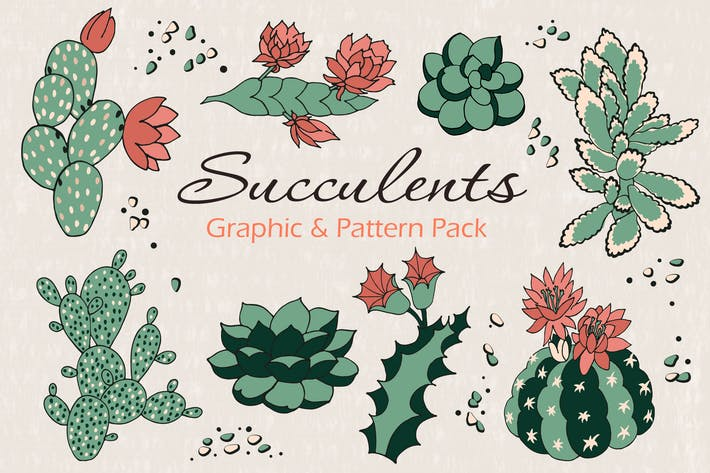 Thumbnail for Succulents