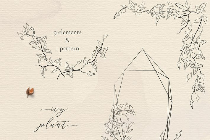 Thumbnail for Line drawing Ivy plant illustrations Florals