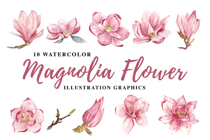 10 Aquarell Magnolie Blume Illustration Grafik