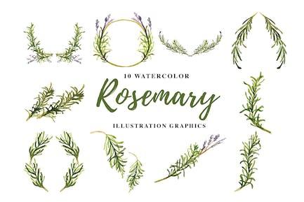 10 Watercolor Rosemary Illustration Graphics