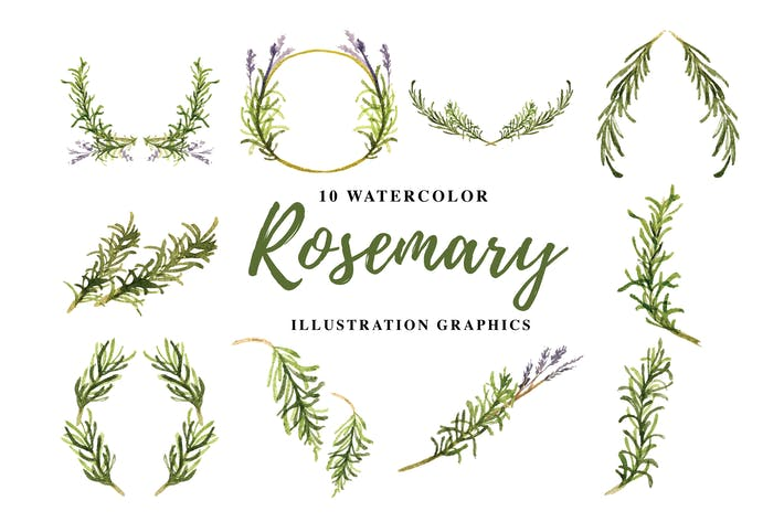 Thumbnail for 10 Watercolor Rosemary Illustration Graphics