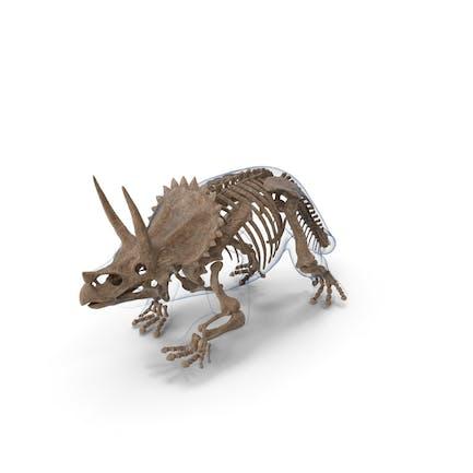 Triceratops esqueleto fósil con piel transparente