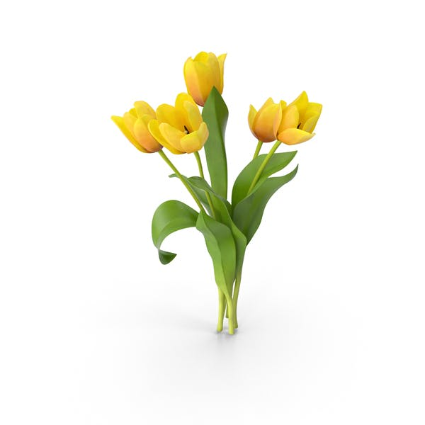Cover Image for Tulips
