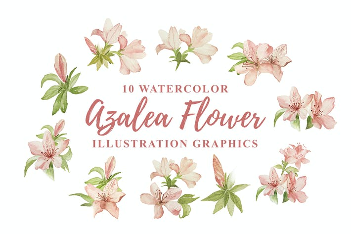 Thumbnail for 10 Watercolor Azalea Flower Illustration Graphics