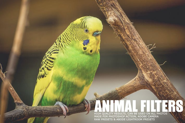 Thumbnail for 17 Animal Photography Lightroom Presets