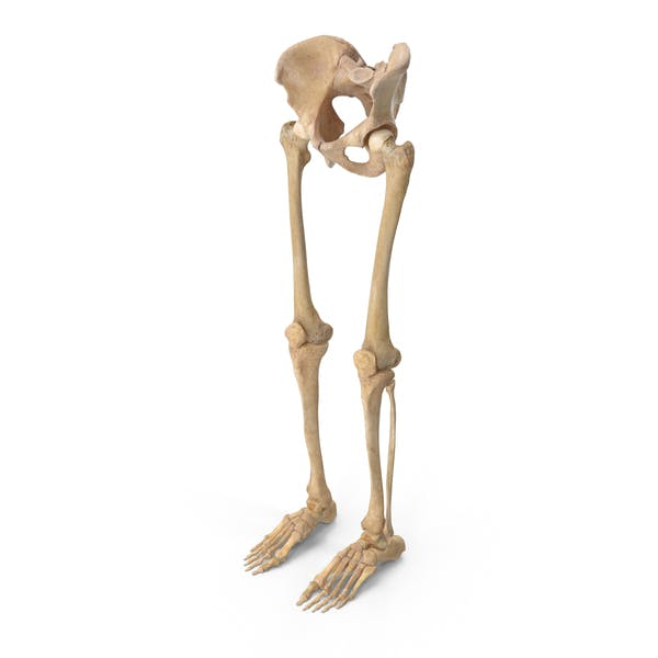 Thumbnail for Piernas humanas y huesos de la pelvis