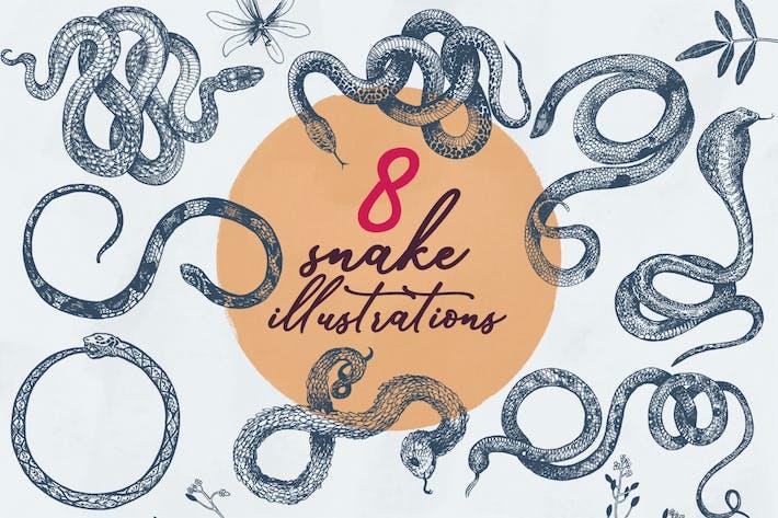 8 Snake Illustrations