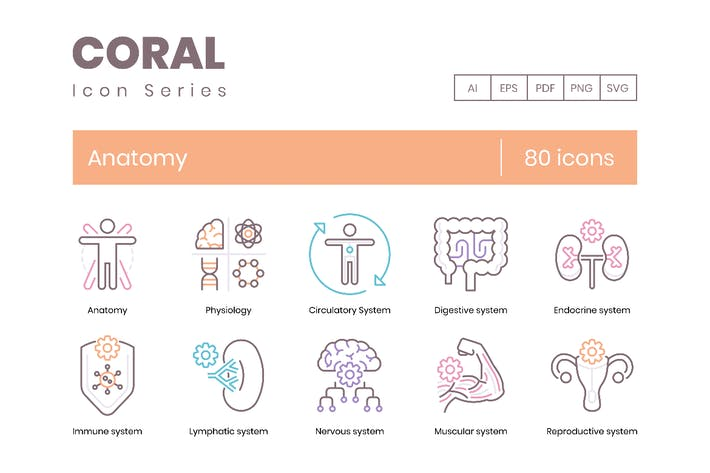 Thumbnail for 80 Anatomy & Medical Profession Line Icons