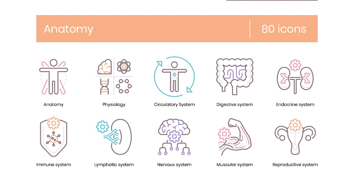 Download 80 Anatomy & Medical Profession Line Icons by Krafted