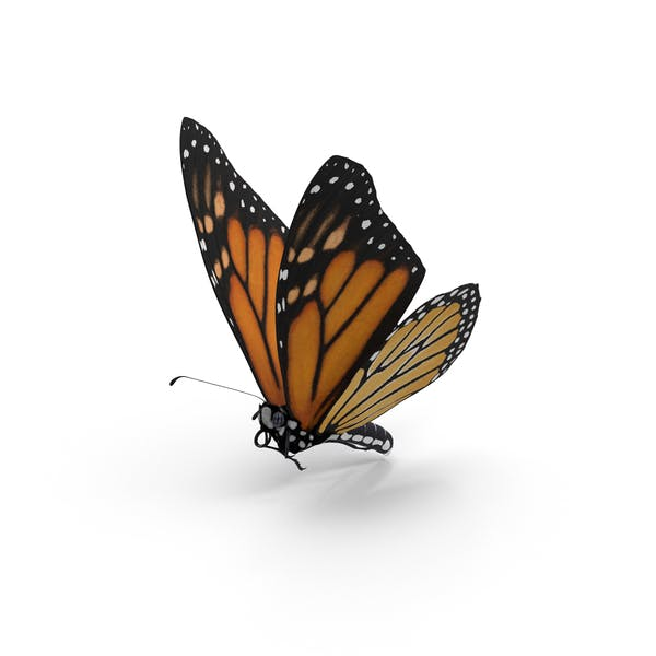 Cover Image for Monarch Butterfly