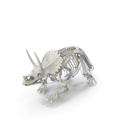 Triceratops - Esqueleto con piel transparente