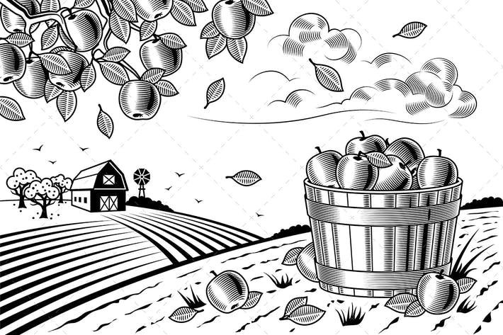 Thumbnail for Apple Harvest Landscape Black And White