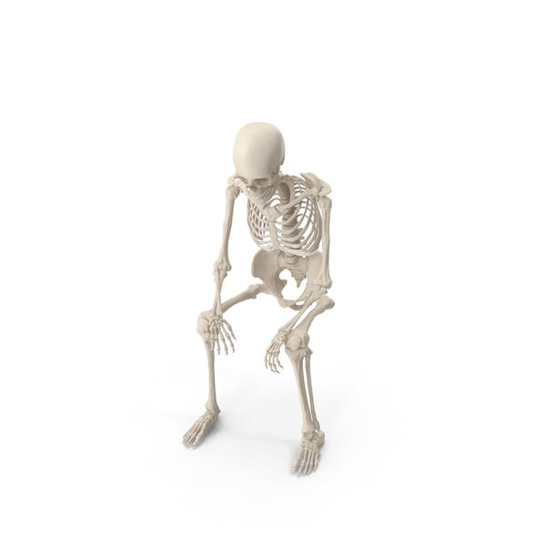 Thumbnail for Skeleton Sitting