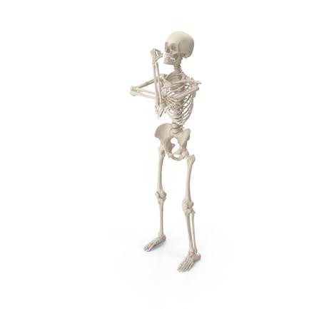 Skelett nach oben