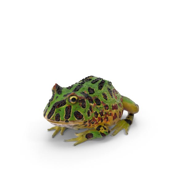 Cover Image for Pacman Frog