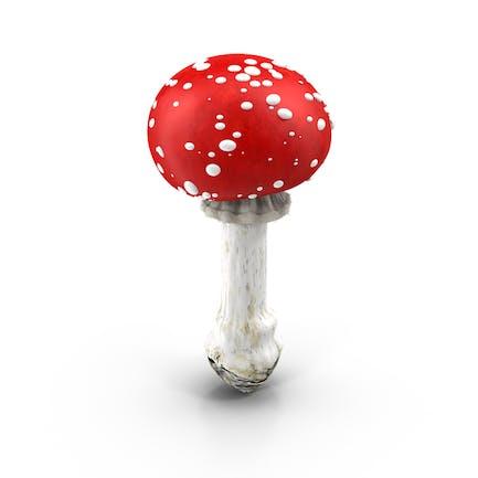Красный гриб с белыми пятнами