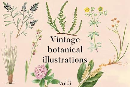 Vintage Botanical Illustrations Vol.3