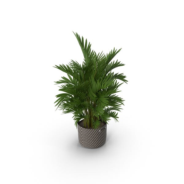 Thumbnail for Potted Palm Plant