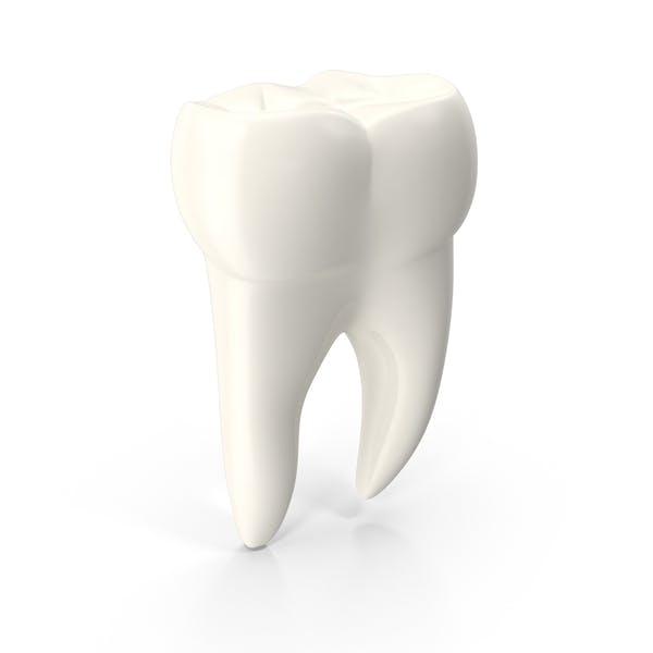 Молярный зуб