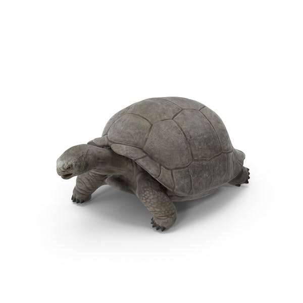 Thumbnail for Галапагосские черепахи
