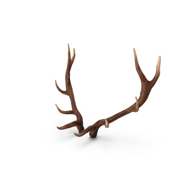 Cover Image for Elk Antlers