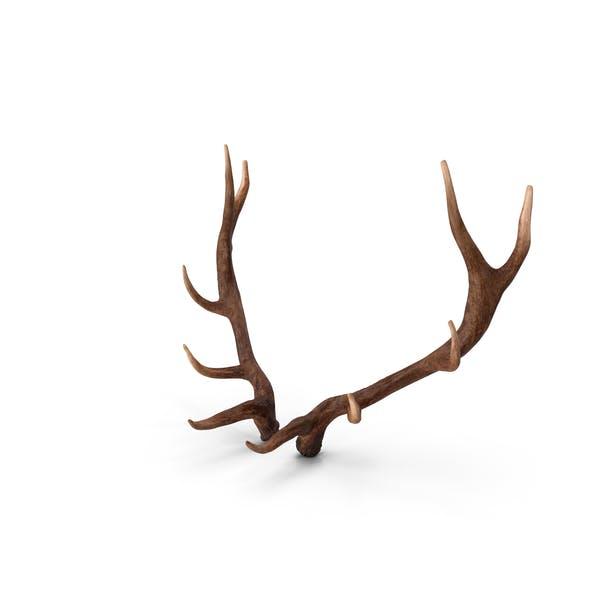 Thumbnail for Elk Antlers