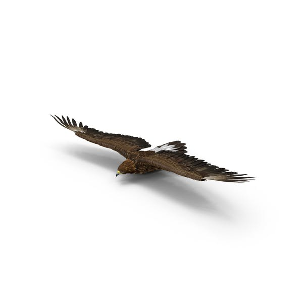 Golden Eagle Gliding