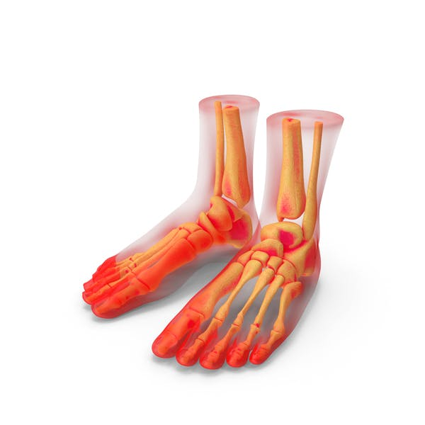 Foot Anatomy Red