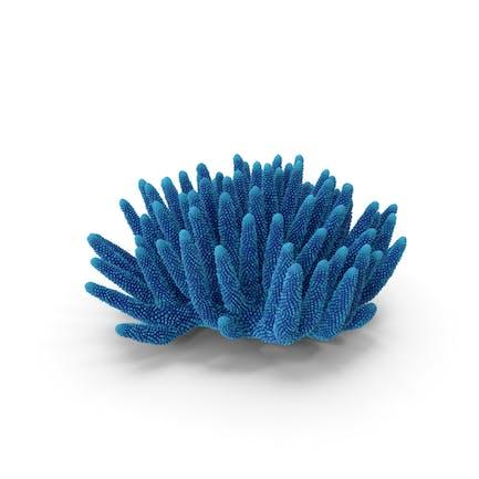 Korallenblau