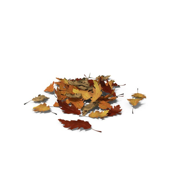 Small Pile Of Oak Leaves By Pixelsquid360 On Envato Elements
