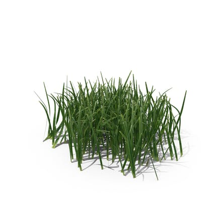 Simple Grass (Small)