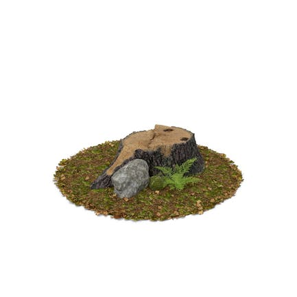 Stump Fern and Rock