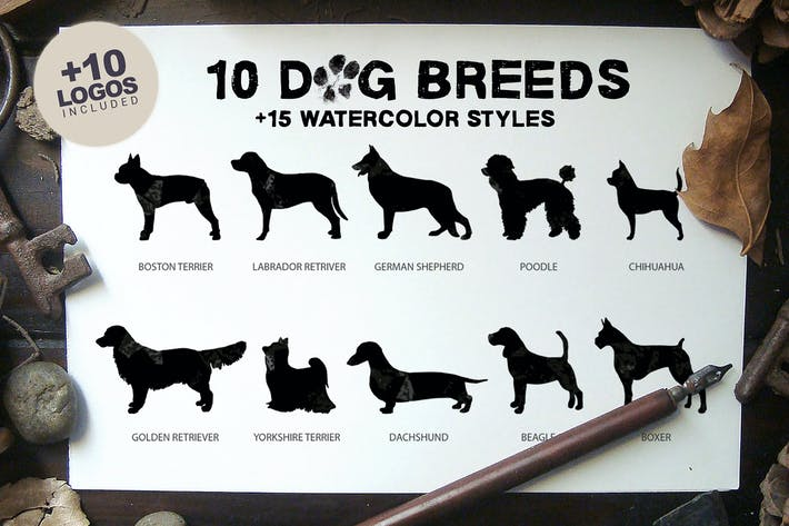 Thumbnail for 10 Dog Breeds + Bonus