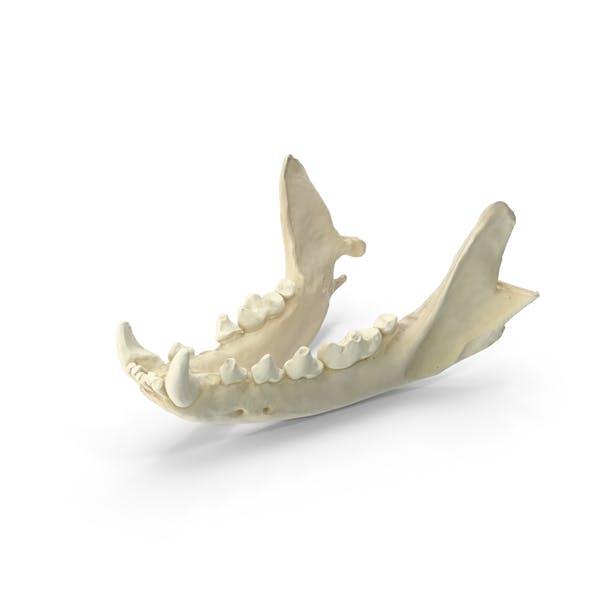 Thumbnail for Beech Marten Jaw Bone