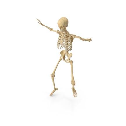 Esqueleto femenino humano real