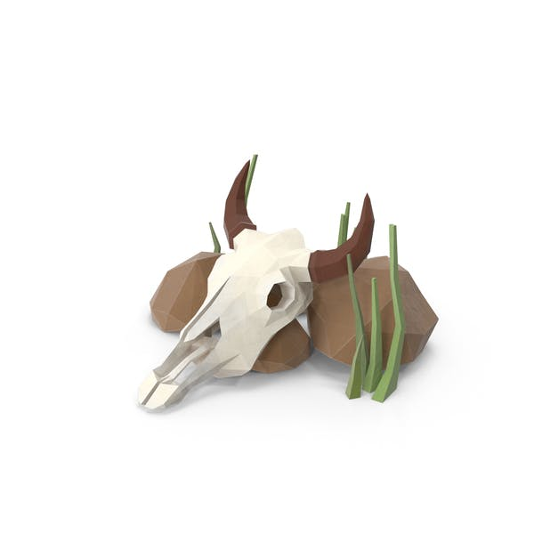 Cow Skull and Rocks