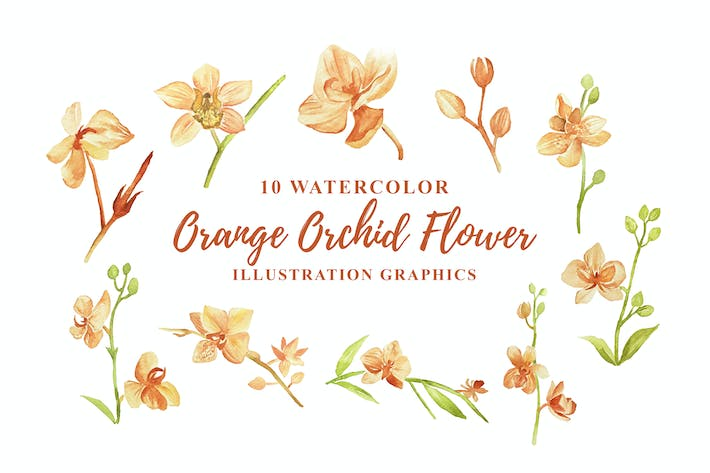 Thumbnail for 10 Watercolor Orange Orchid Flower Illustration